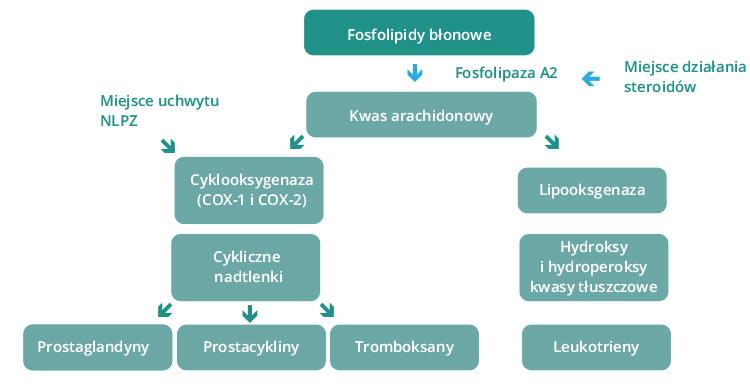Diagram 1. Kaskada kwasu arachidonowego
