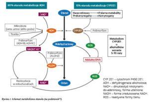 Schemat metabolizmu etanolu